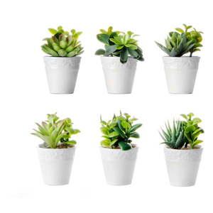Zestaw 6 roślin dekoracyjnych w doniczkach Unimasa obraz