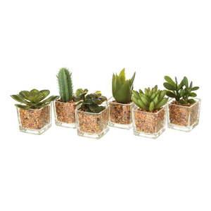 Zestaw 6 dekoracyjnych kaktusów Unimasa obraz