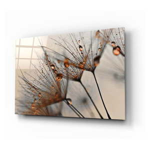 Szklany obraz Insigne Cinnamon Dandelion, 72x46 cm obraz