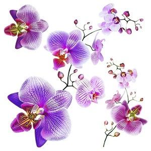 Naklejka Orchids, 30 x 30 cm obraz